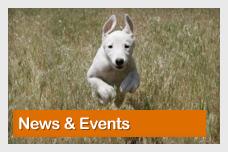 Dogtastic News